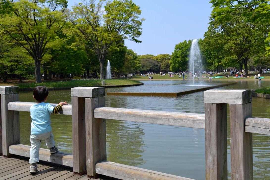 Guía viaje japón, tokyo, yoyogi